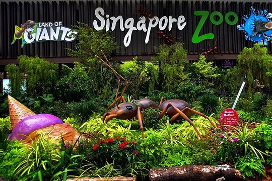 Famous place of Singapore Zoo to visit