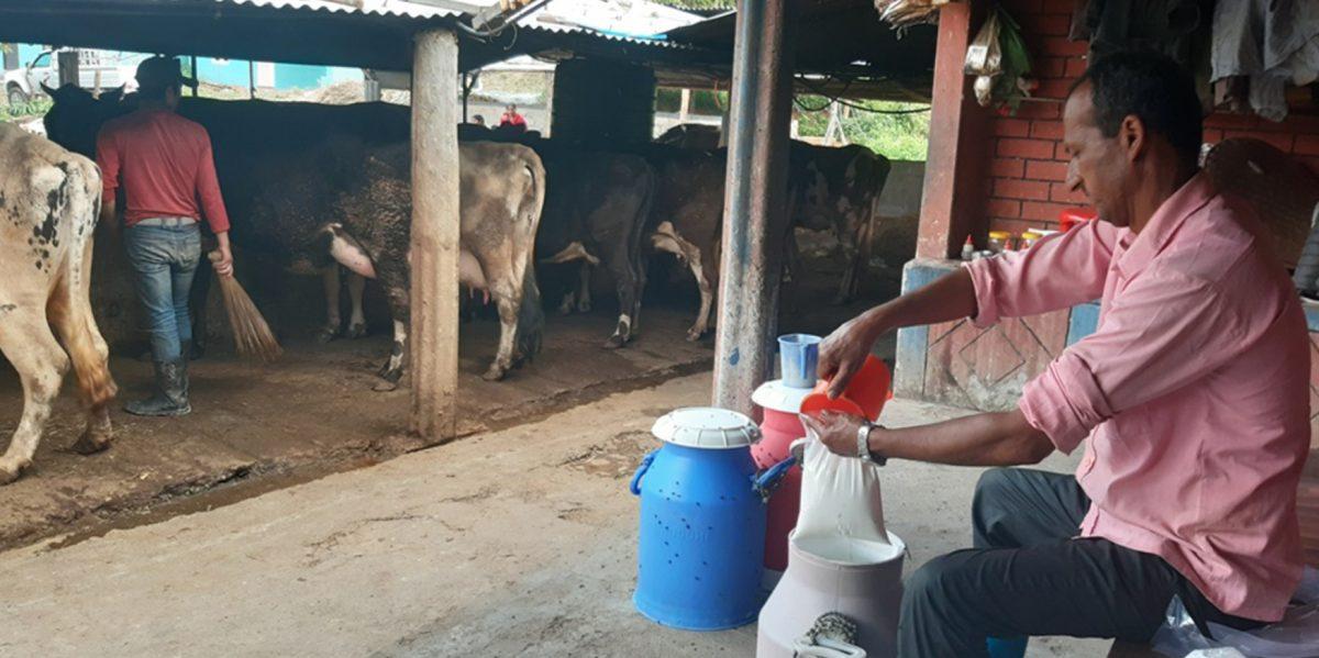 During Lockdown Farmer's effect on  the milk